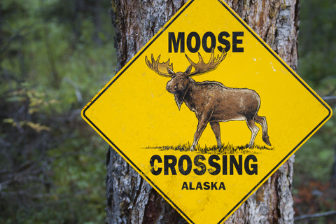 A MOOSE in Planning